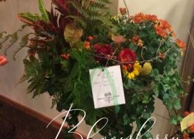Fall Mum European Garden Funeral
