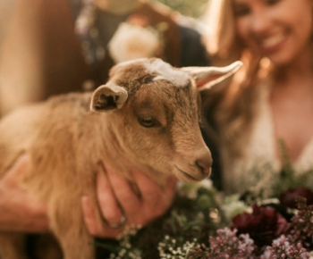 Bride posing with a goat outdoor rustic wedding